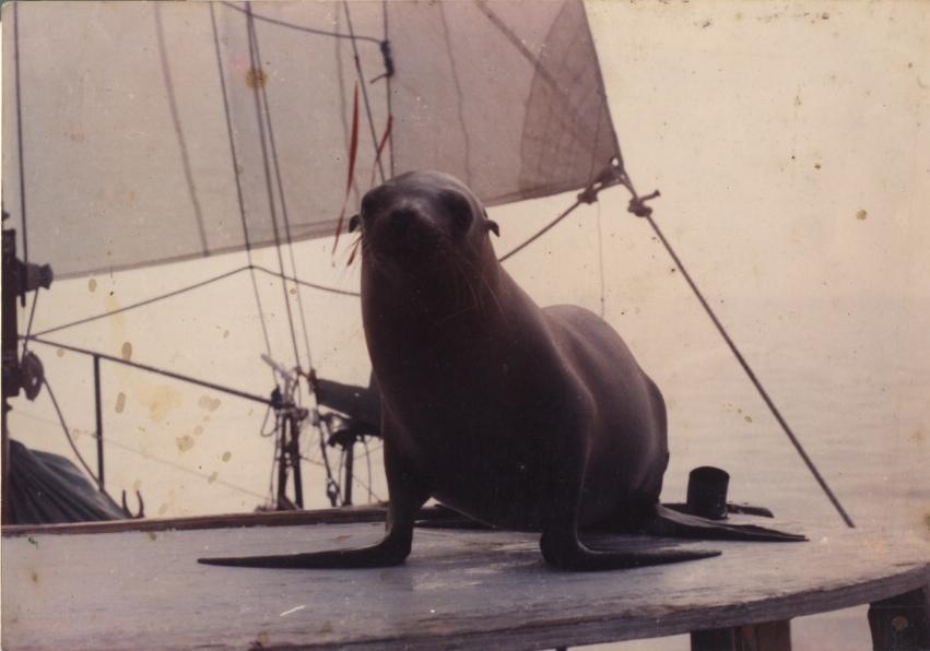 foca-barca