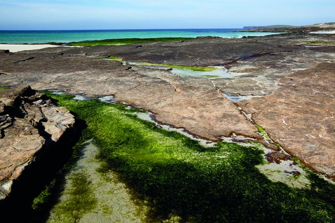 Bassa marea, isola di Westray