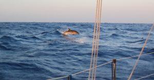 delfini a marettimo (6)