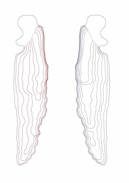 10-nageoire-pectorale-b