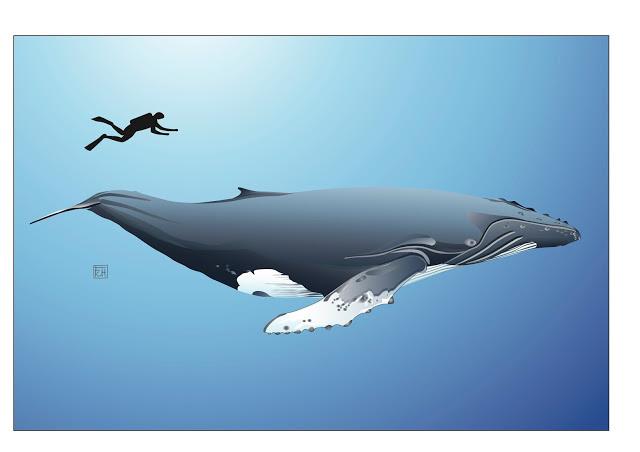 8-baleine-a-bosse-a