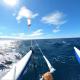 kite-marano